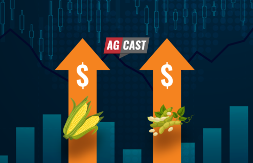 5 Tips for Marketers to Capitalize on Bullish Grain Market Prices